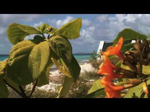 Bonaire Rentacar